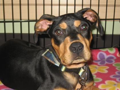 Dog Breed Selector Rspca