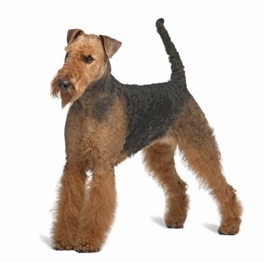 Dog Breed Online Test