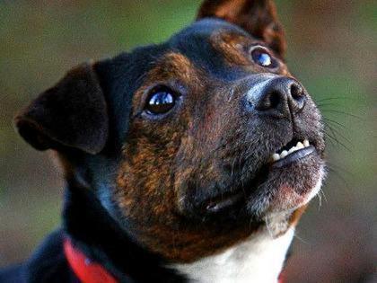 Walking Dog Breeds Kaine