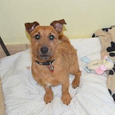Battersea Dog Home Intelligent Toys